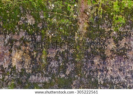 moss wall stone texture old background - stock photo