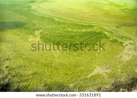Moss waste - stock photo