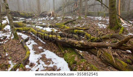 Moss wrapped tree parts against melting snow in early spring,Bialowieza Forest,Poland,Europe - stock photo