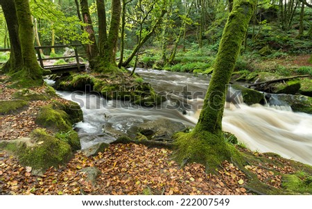 Mossy beech woodland and a fast flowing river at Golitha Falls in Cornwall - stock photo