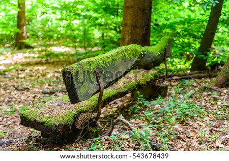 Mossy bench in woods