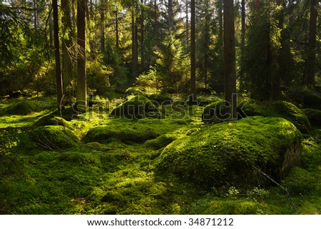 Mossy boulders in a boreal coniferous forest