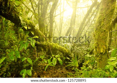 mossy forest, cameron highlands in malaysia. Softness due to fogs in the morning - stock photo