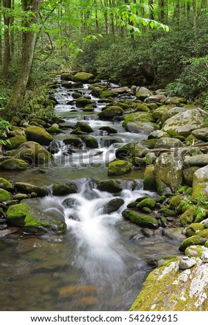 Mossy Forest Creek with smooth water