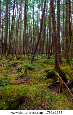 Mossy Forest of Mt.YATSUGATAKE, Nagano Prefecture/Japan, 2013/6/6.