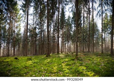 Mossy green forest - stock photo