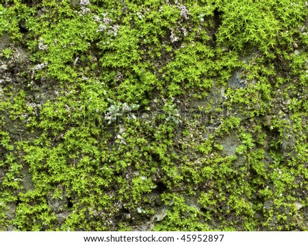 Mossy Lichen Macro - stock photo