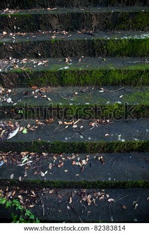 Mossy stairs - stock photo