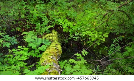 Mossy tree trunk in a deciduous forest - stock photo