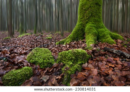 mossy tree trunk in the forest - stock photo