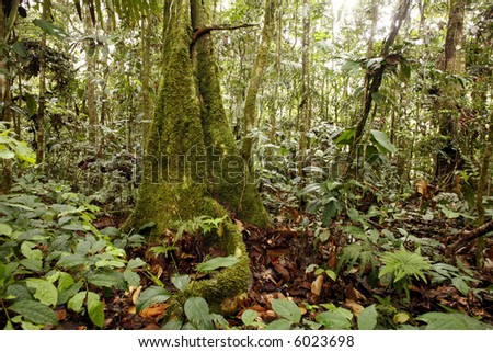 Mossy tree trunk in tropical rainforest - stock photo