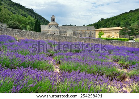 Most beautiful lavender field in Provence. An ancient monastery Abbaye Notre-Dame de Senanque ( Abbey of Senanque) at early morning. Vaucluse, France