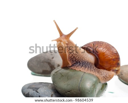 Most land snails on the rock