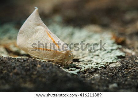 Moth,Butterfly, Insects,nature.Moth in Doi Inthanon National Park. Thailand country  - stock photo