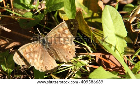 Moth butterfly on ground among grass leaves. Macro shot. - stock photo