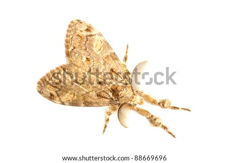 Moth isolated - stock photo