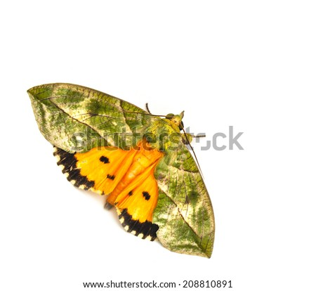 moth isolated on the white background
