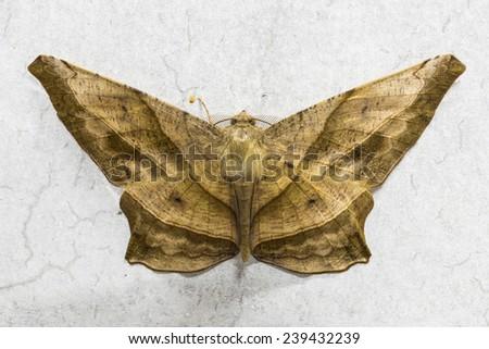 moth on a concrete wall - stock photo