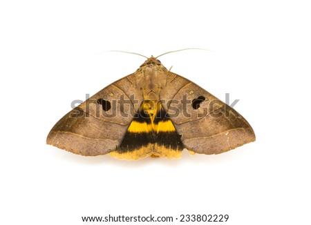 moth on a white background - stock photo