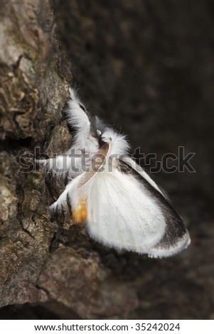 Moth on tree. Macro photo. - stock photo