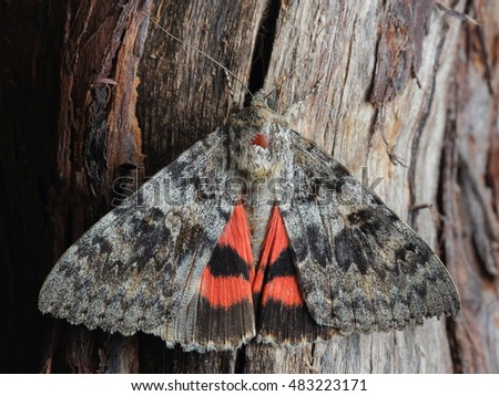Underwing Stock Images Royalty Free Images Amp Vectors