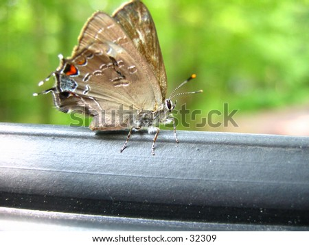 Moth sitting on a rail - stock photo