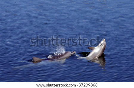 Mother and Baby Bottlenose Dophins - stock photo