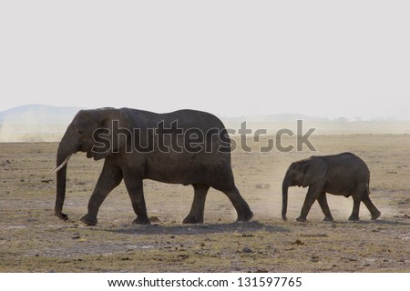 Mother and Baby Elephant - stock photo