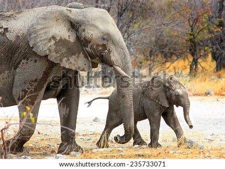 Mother and Baby Elephant in the bush - stock photo