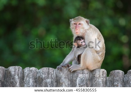 Mother and baby monkey at the Khao Kheow Open Zoo in Thailand - stock photo