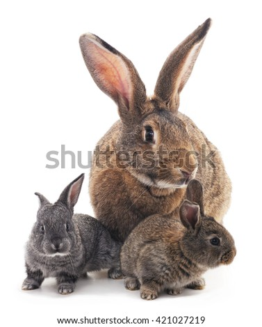 Mother and children rabbits on a white background.