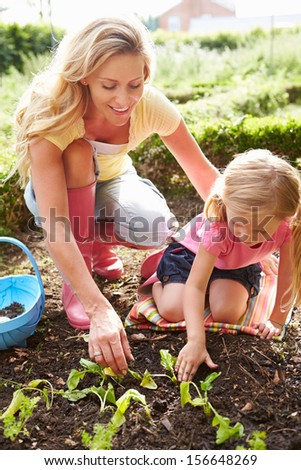 Mother And Daughter Planting Seedlings On Allotment - stock photo