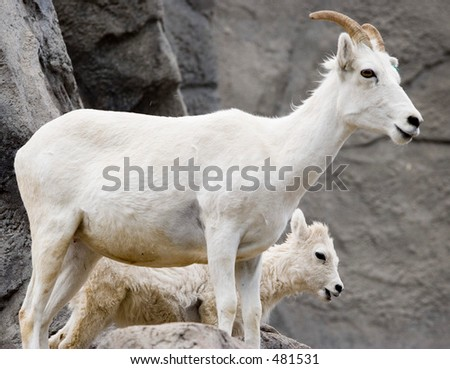 Mother and Kid - Denver Zoo - stock photo
