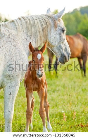 Mother and little foal on the field - stock photo
