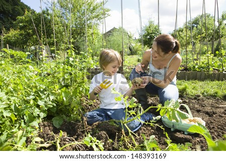 Mother and son gardening together in an allotment - stock photo