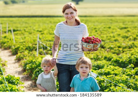 mother and two little sibling boys on organic strawberry farm in summer, picking berries. Outdoors