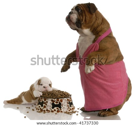 mother bulldog wearing pink dress standing beside puppy with full bowl of dog food - stock photo