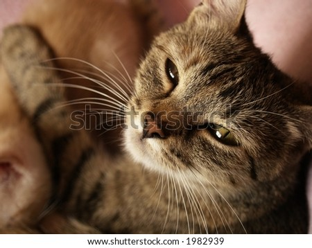 mother cat - stock photo