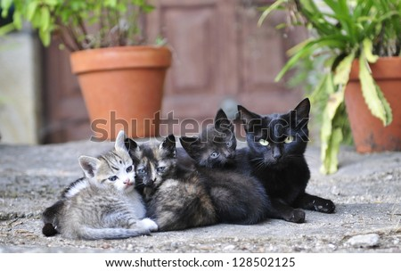 Kittens separated from mother too early