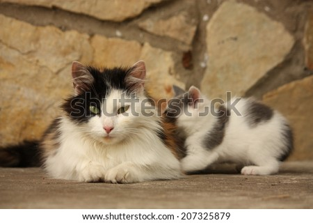 Mother cat and her sleepy kittens resting together - stock photo