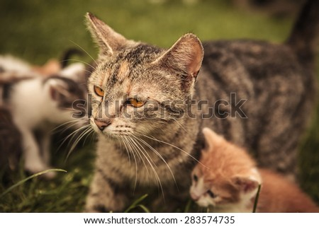 mother cat and its many little cubs playing in the grass - stock photo