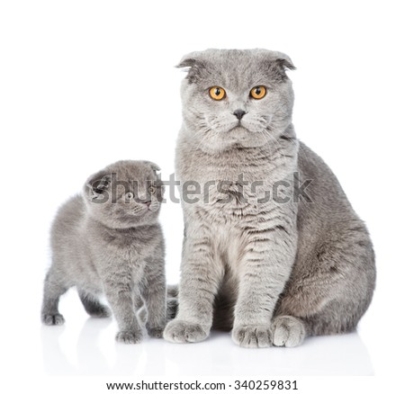 Mother cat and little kitten sitting together. isolated on white background