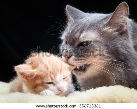 cat bedding twin