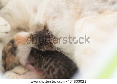 mother cat breastfeeding her child, close up image - stock photo