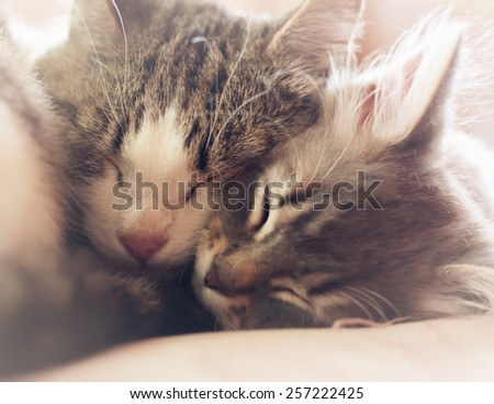 Mother cat hugging and sleeping little kitten, soft focus - stock photo