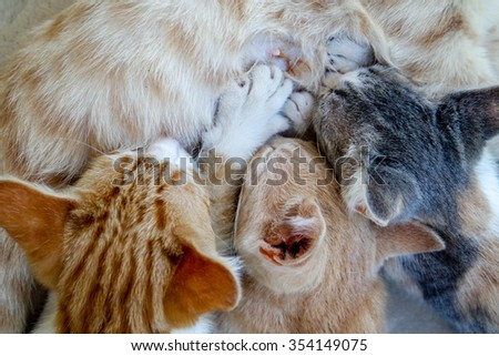 Mother Cat Nursing her three small Kitten - stock photo