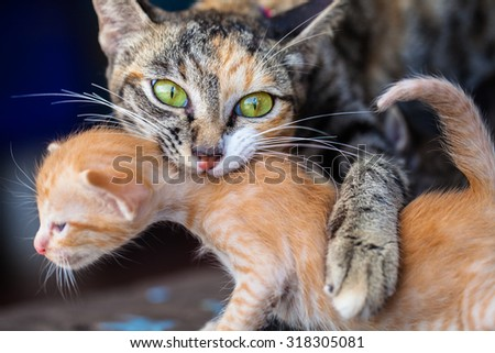 Mother cat with newborn kitten. - stock photo