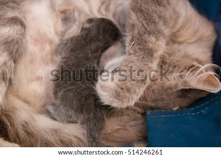 Mother cat with three days old kitten