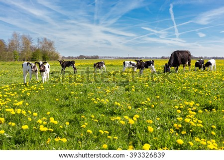 Mother cow with newborn calves in green grass with yellow dandelions during spring - stock photo