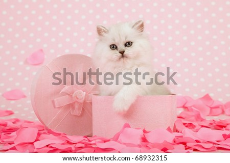 Mother Day Valentine kitten in pink gift box with rose petals